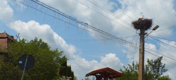 Une cigogne passant par la Roumanie